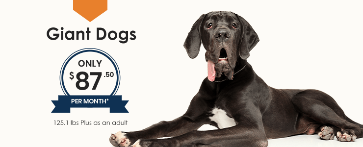 Giant Dogs Wellness Plan, Thomasville Veterinary Hospital Urgent Care + Surgery