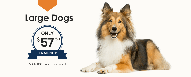 Large Dogs Wellness Plan, Thomasville Veterinary Hospital Urgent Care + Surgery