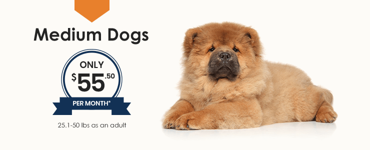 Medium Dogs Wellness Plan, Thomasville Veterinary Hospital Urgent Care + Surgery