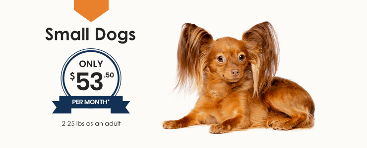 Small Dogs Wellness Plan, Thomasville Veterinary Hospital Urgent Care + Surgery