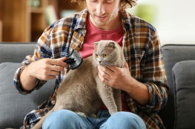 Basics of grooming cats and dogs, Thomasville Vet