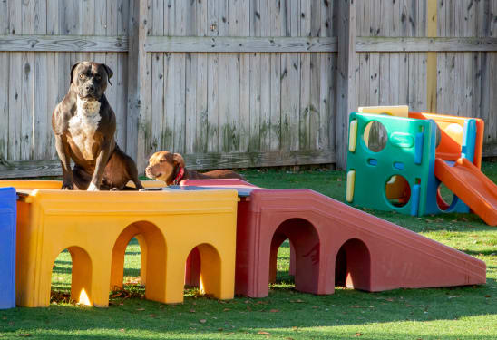 Playtime & Exercise Doggy Daycare, Thomasville Vet