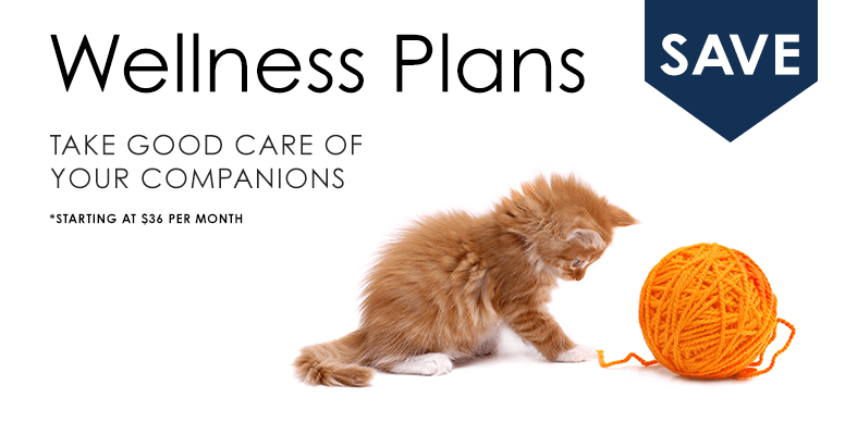 Wellness Plans, Thomasville Vet