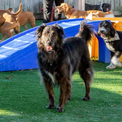 Pet Resort Daycare + Spa, Thomasville Vet
